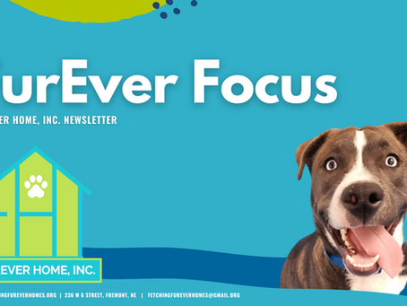 FurEver Focus Newsletter: 2021 - Q1
