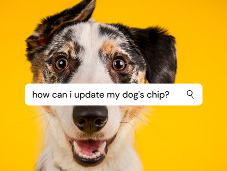 Why Microchip Your Pet?