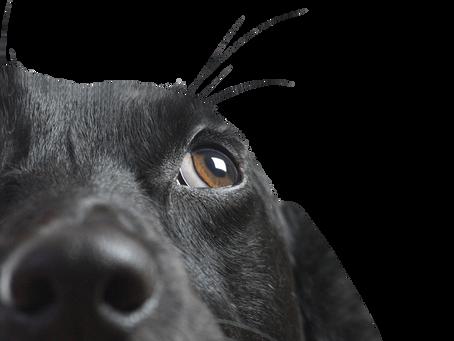 Dog Bite Prevention
