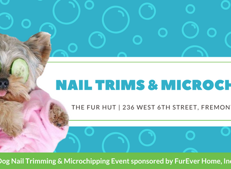 Nail  Trims & Microchipping at the furhut!