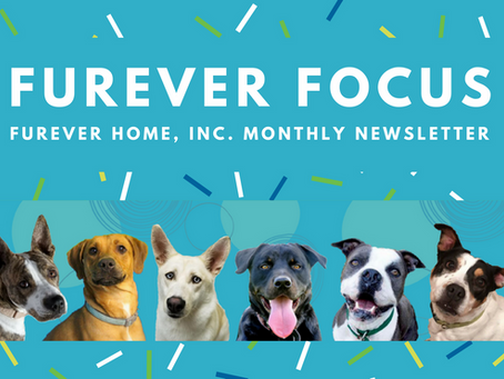 FurEver Focus Newsletter | August 2018