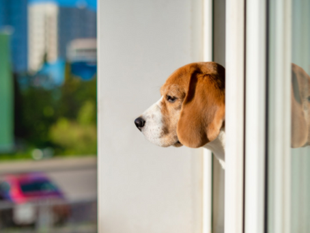 Preparing Your Dog as People Transition Back to the Office