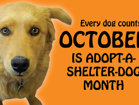 October is Adopt-a-Shelter-Dog Month
