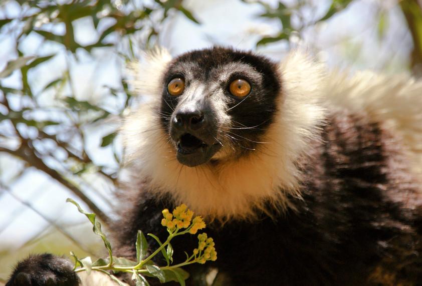 Madagaskar-054.jpg