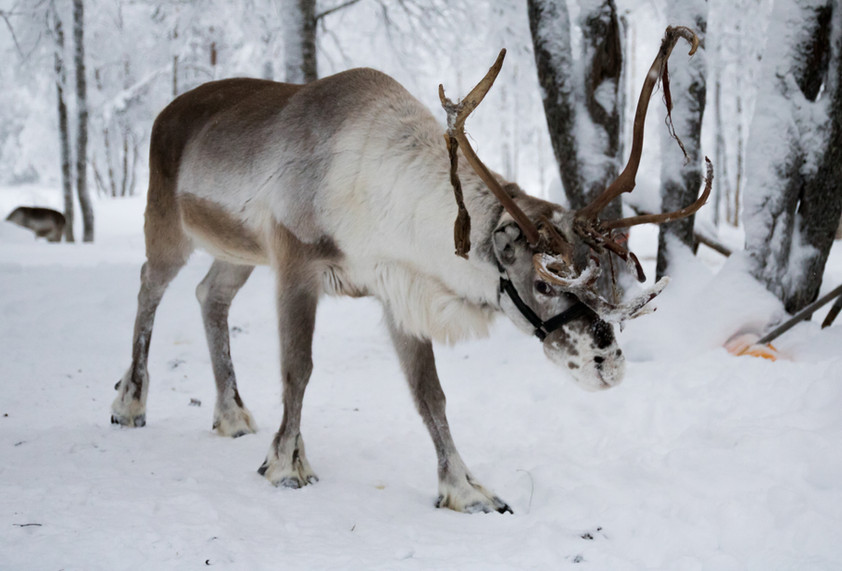 Lapland - uitgewerkt-4367.jpg