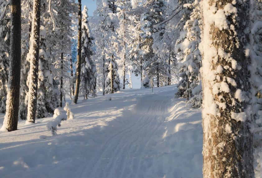Lapland - uitgewerkt-4546.jpg