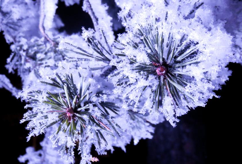 Lapland - uitgewerkt-3007.jpg