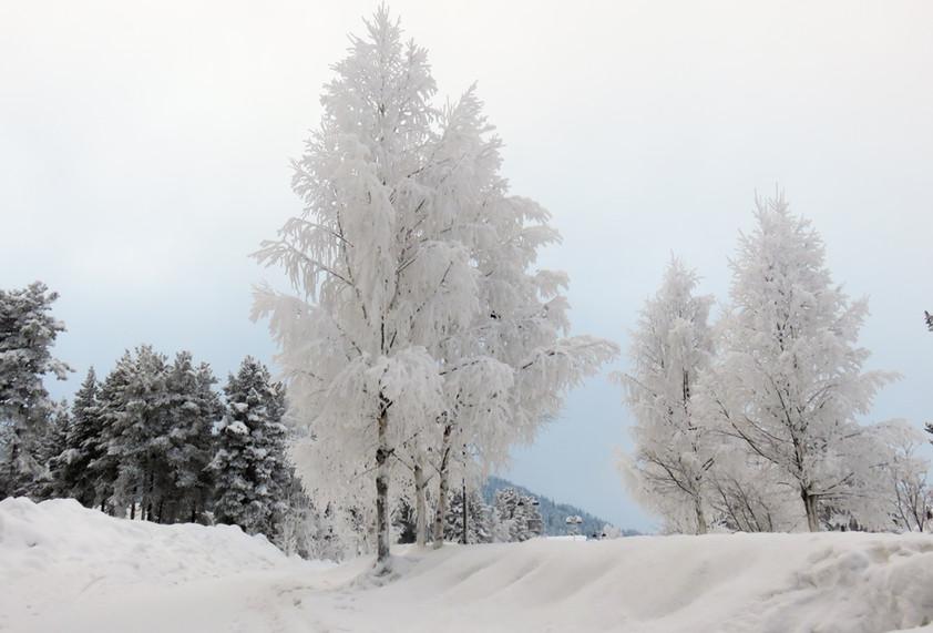 Lapland - uitgewerkt-3010.jpg