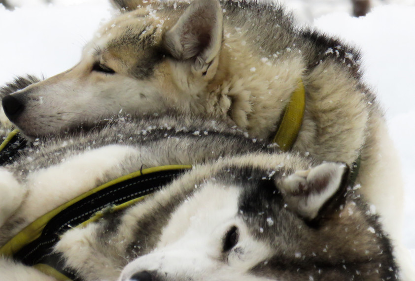 Lapland - uitgewerkt-3143.jpg