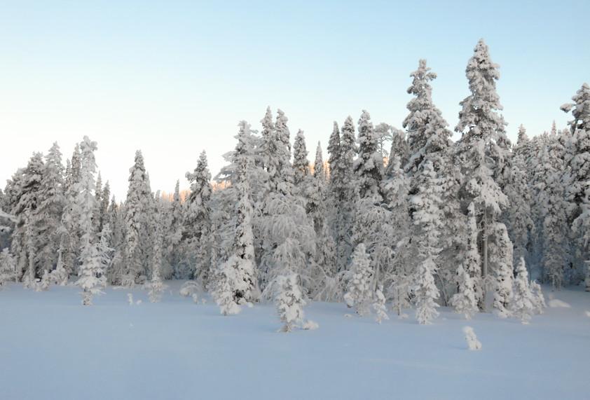 Lapland - uitgewerkt-3086.jpg