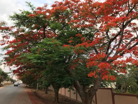 Van Malawi naar Zambia