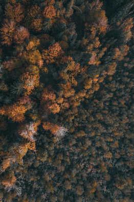 Nature-20.jpg