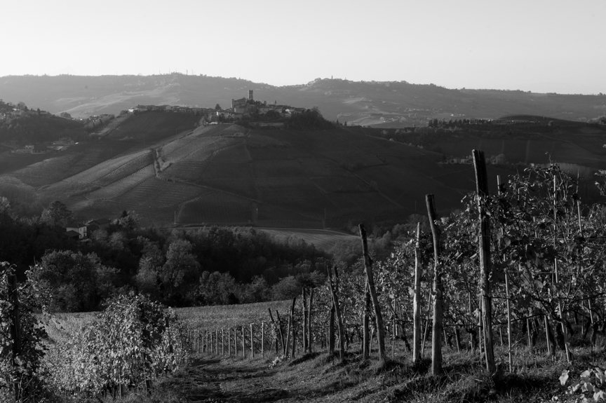 Italian vineyards and castle