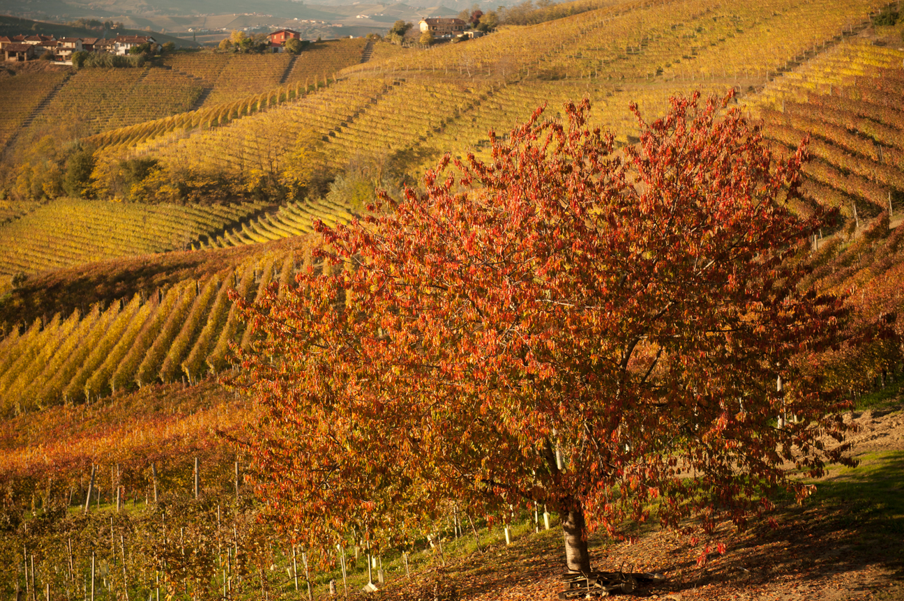 Autumn on Italian vineyards