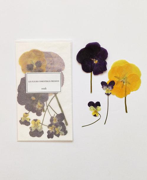 Mix Violettes Cornues & Pensées