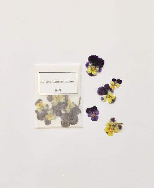 Violettes Cornues