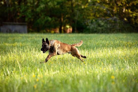 bjorn running.jpg