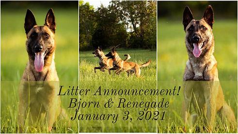 Bjorn Renegade Litter Announcement.jpg