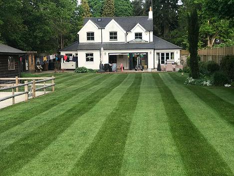 Lawn treatments Farnham, Lawn moss treatment, Lawn treatment services in Farnham, Surrey lawn services, Lawn treatment services, Lawn care services in Surrey, Lawn care services, Lawn renovation services Surrey