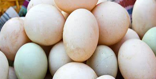Duck Eggs (When Available)
