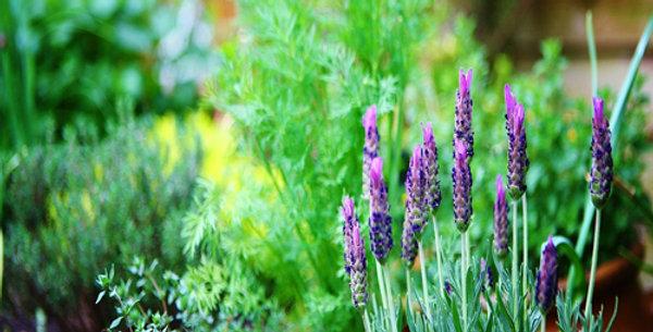 Garden Plants & Herbs