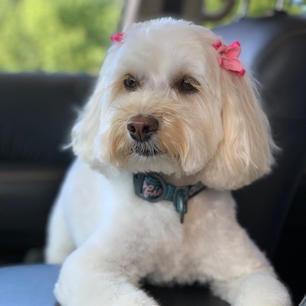 Meet Sofie