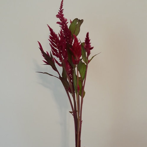 Celosia 'Pampas Plume' (bunch of 10)