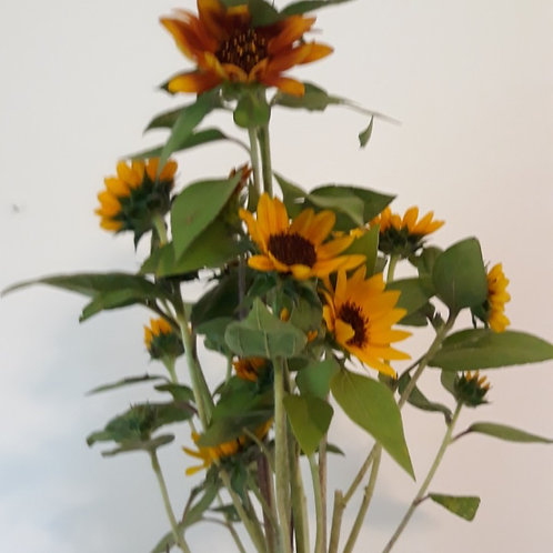 Branching Sunflowers (bunch of 10)