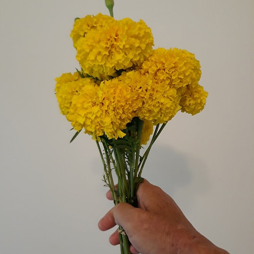 Marigold (bunch of 10)