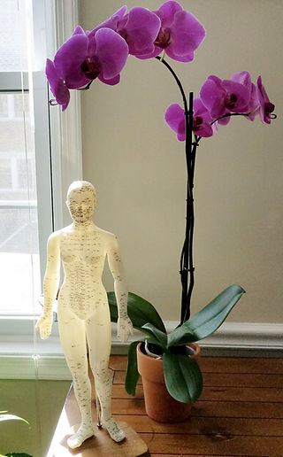 Acupuncture Balance Method