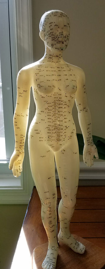 Acupuncture meridian model