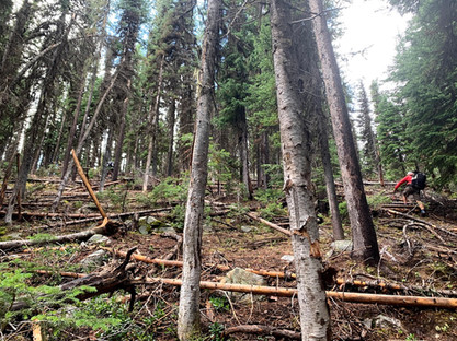 Wallowa Whitman National Forest near Sumpter