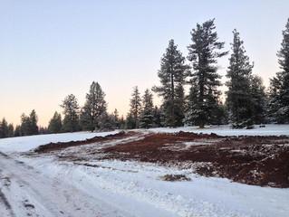 CdV's Field Notes, 12/8/2018: Christmas Tree Scoping via Whiskey Creek Road