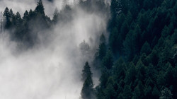 Morning Mist in Cool Forests