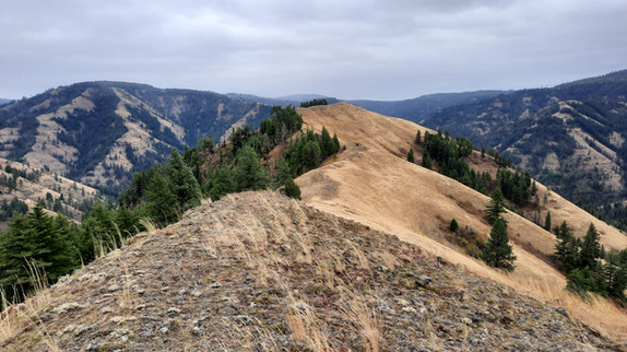 North Fork Umatilla Wilderness