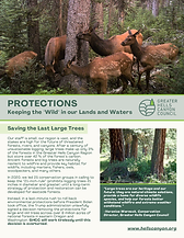 Protections factsheet image.png
