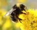 Bee Informed!