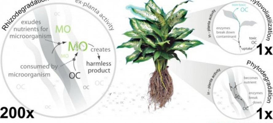 CASE-Plant-Systems-889x460.jpg
