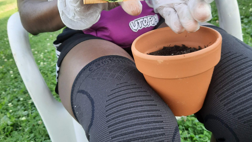 Planting Seeds, Connecting Roots