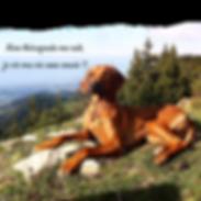 Chien-chiens-ostéopathie-canine-animale-