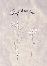Gardamine.jpg