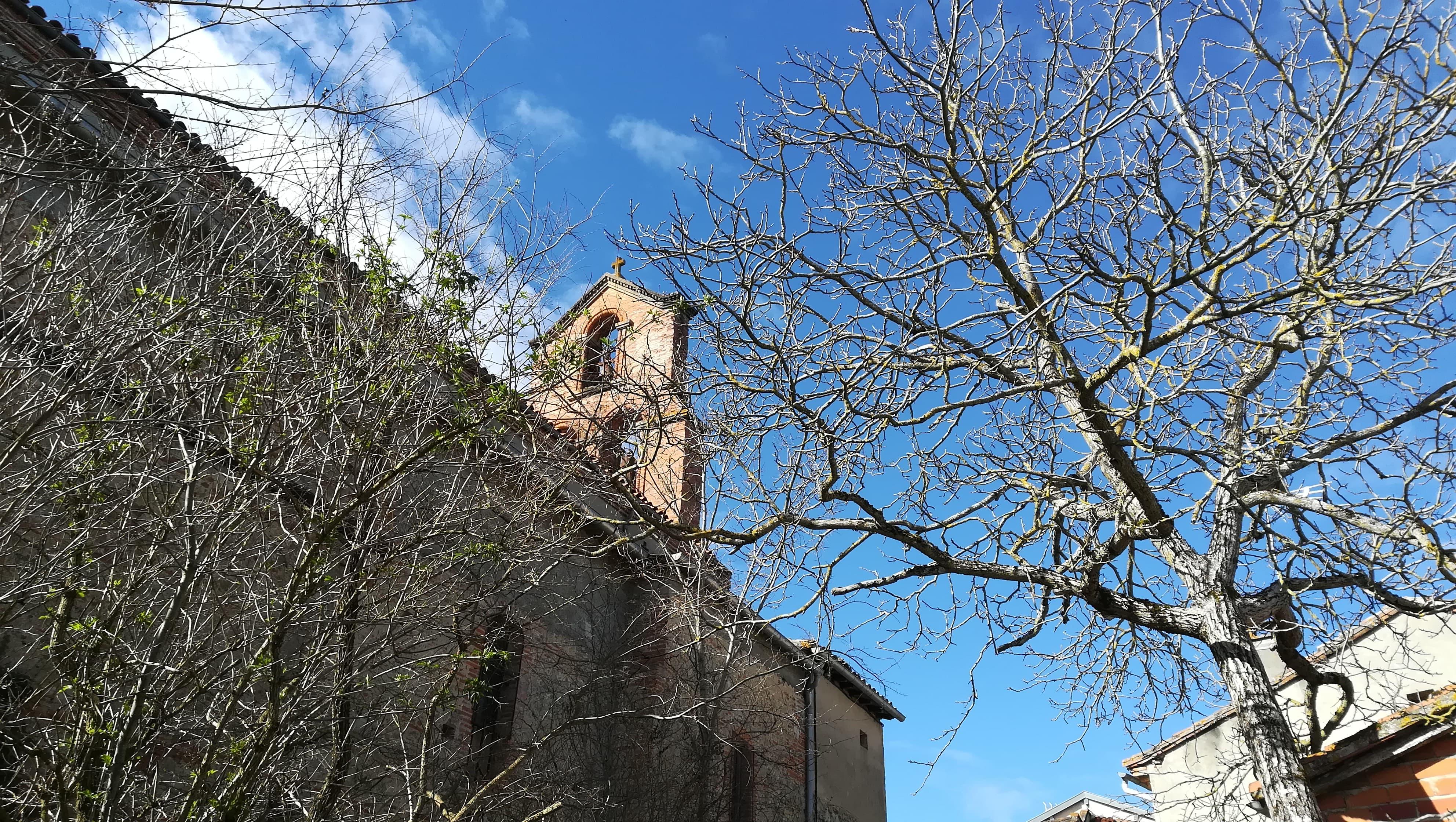 arbres clocher