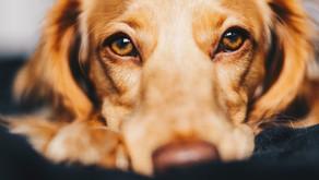 Le stress : Le chien est-il concerné?