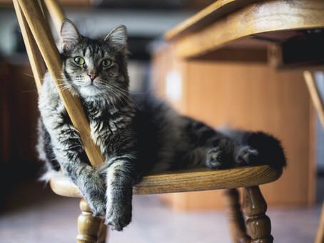 """Le chat """"Un odorat extrêmement développé!"""""""