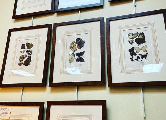 Set of seven antique prints