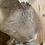 Thumbnail: Deer Head / wall mount