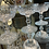 Thumbnail: Lismore by Waterford champagne glasses