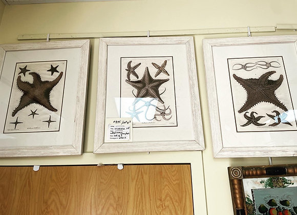 3 lithographs STARFISH set