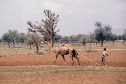 46. Rajasthan