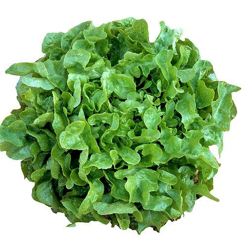 Lettuce, green - Each
